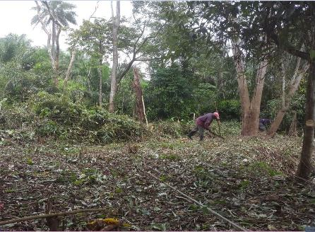 Clearing of Vegetation